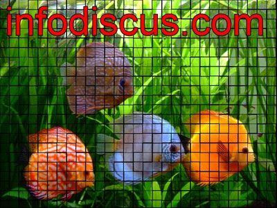 Webzine infodiscus.com: objectif du Site
