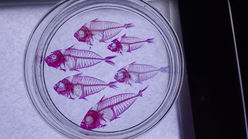 poissons analyse biologique