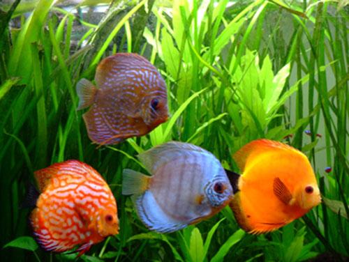 des plantes en aquarium