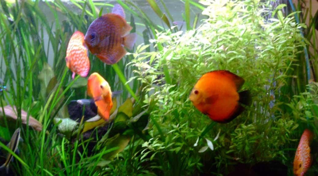Choix des plantes et spécificités pour aquariums