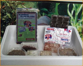 nourriture vivante pour poissons et discus