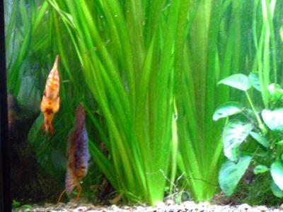 Rôle esthétique et biologique des plantes aquatiques.