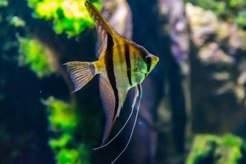 Hygiène et Désinfection des aquariums