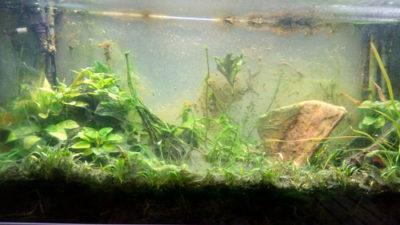 la prolif 233 ration des algues dans un aquarium