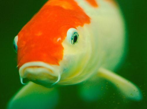 comportement de nos poissons
