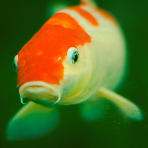 Comment interpréter le comportement de nos poissons