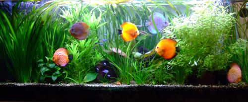 poissons-neons-et-discus
